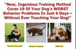 Chet Womach's Dog Training Secrets