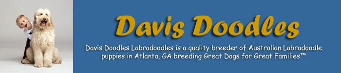 Davis Doodles