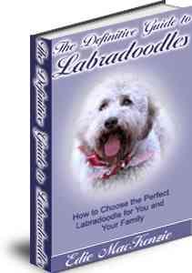 Labradoodle book